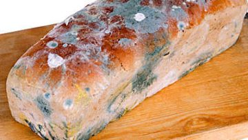 What will happen if you eat bread with mold?