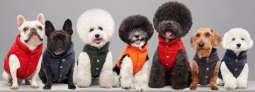 Dog Apparel - Most fashionable dogs in the world!
