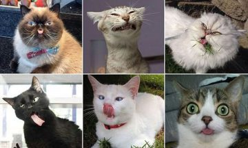 These Are Probably the Ugliest Cats in The World