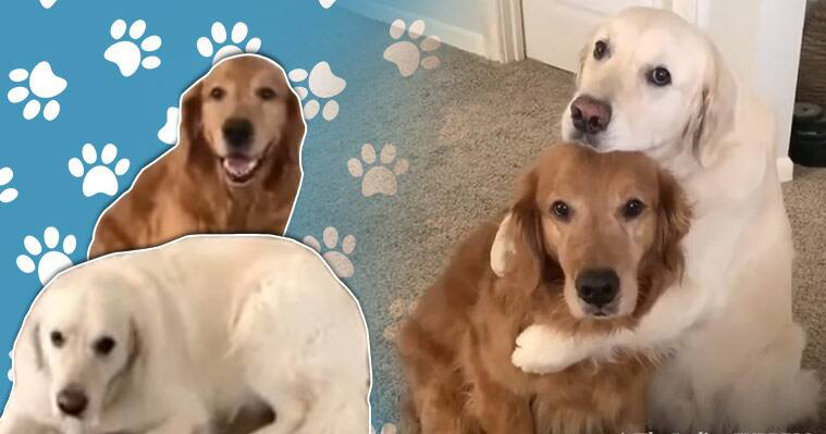 Cute Video To Start Off Your Day Right - Must Watch!