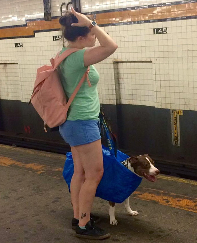 NYC Subway Banned Dogs That Don't Fit in a Bag - New Yorkers Didn't Disappoint