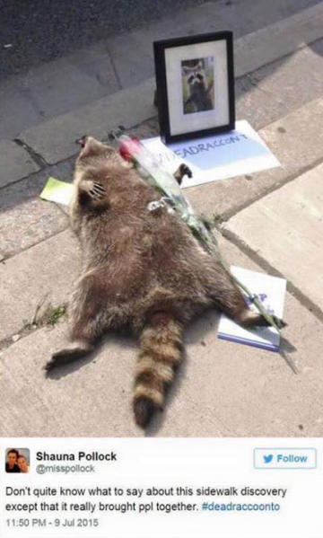 Tragic and Hilarious Dead Racoon Memorial in Canada