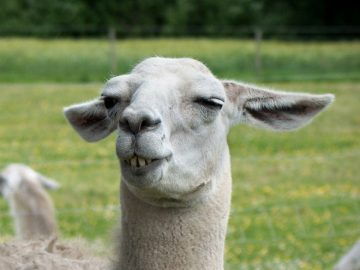 A Gallery of Really Unphotogenic Animals (20 Pics)