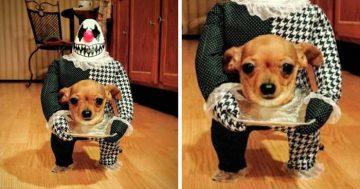 Funniest Halloween Pet Costume Ideas
